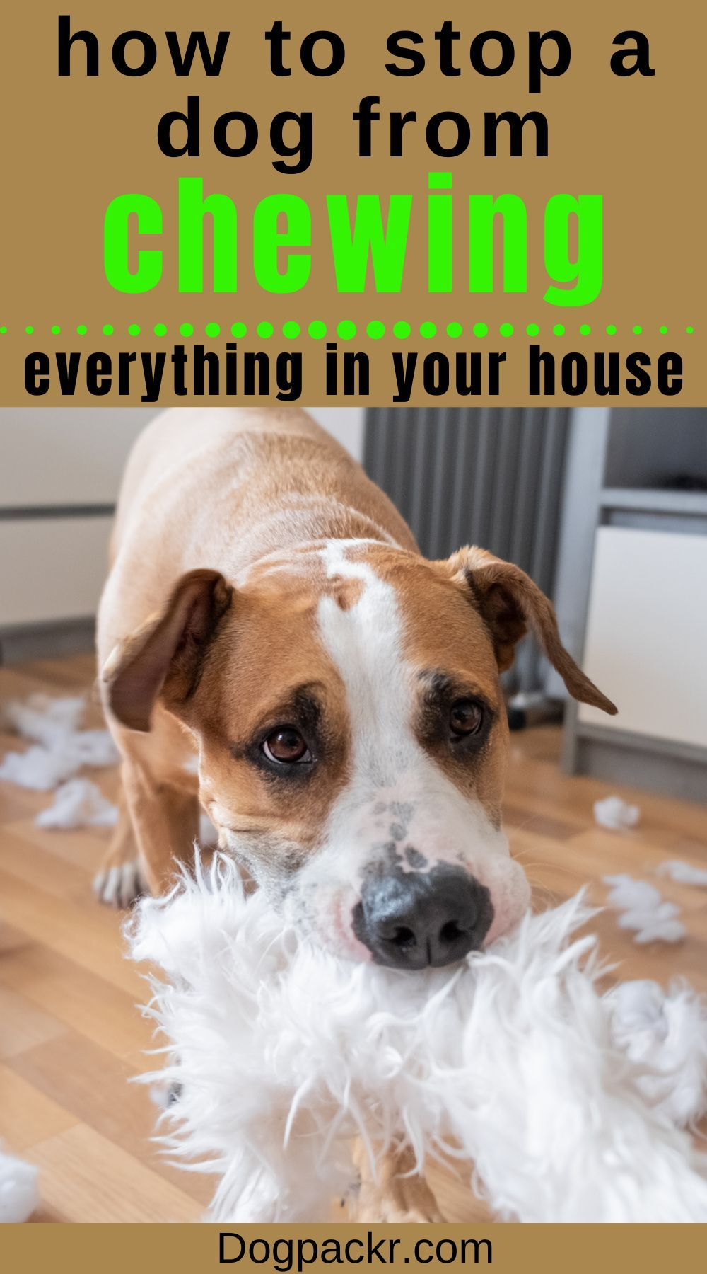 How to stop a dog from chewing on things dogpackr dogs