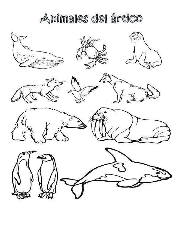 Dorable ártico Animales Para Colorear Páginas Para Niños En Edad ...