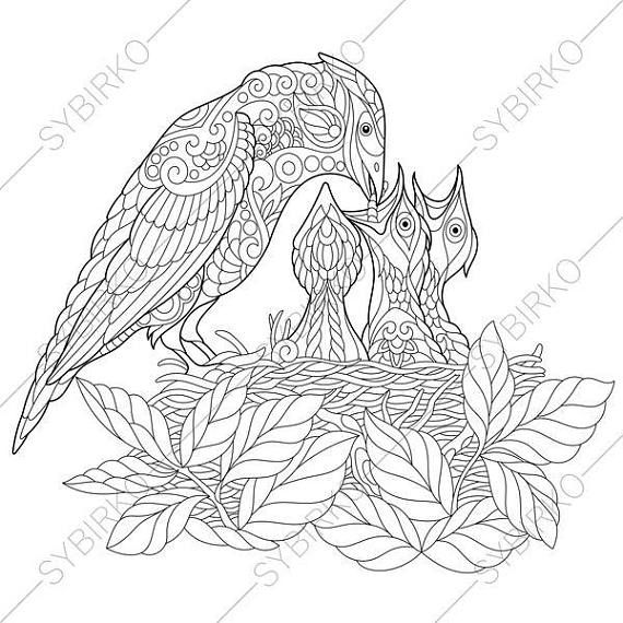 Coloring Pages For Adults Jay Bird Nest Adult Coloring Pages