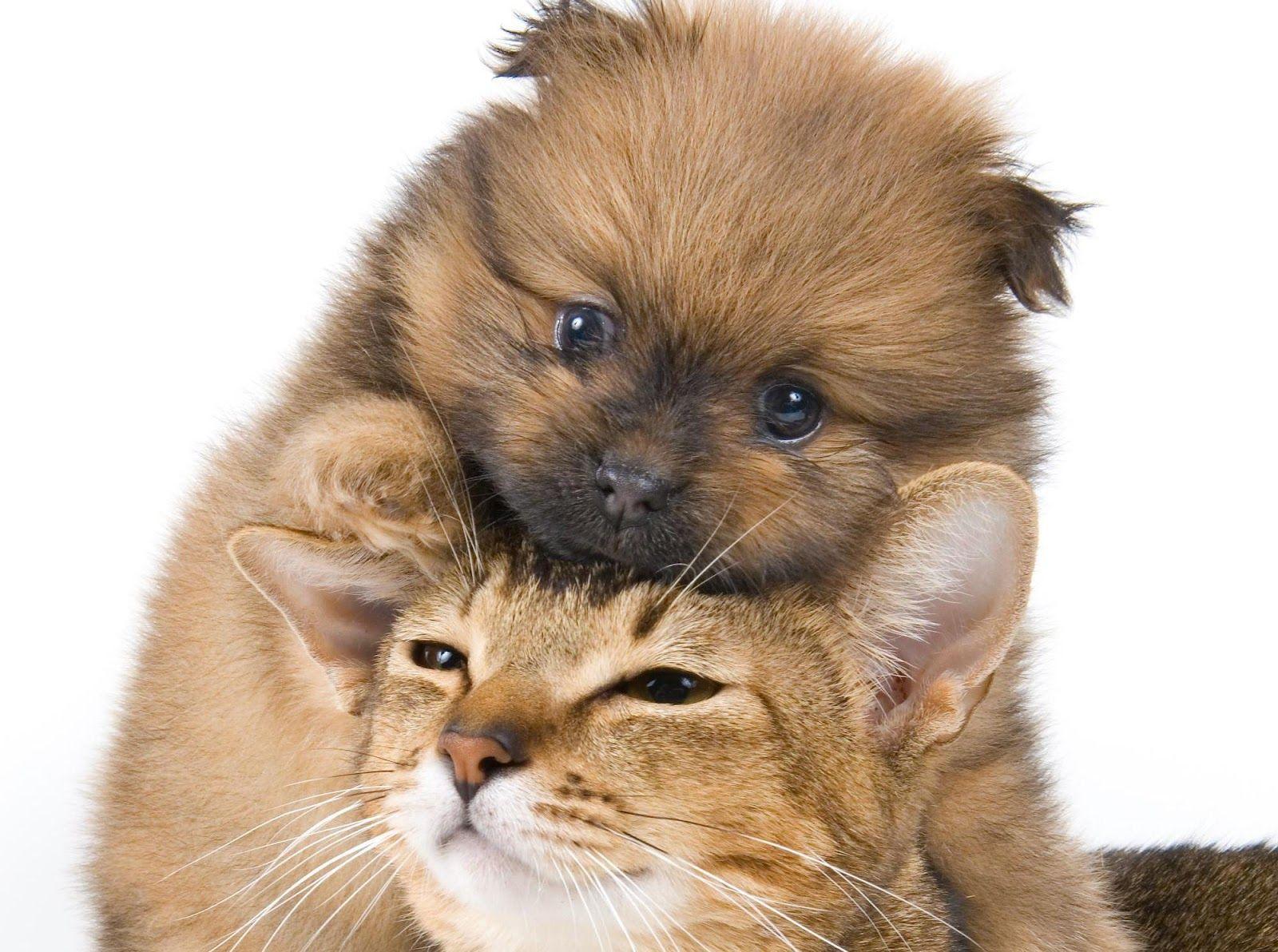 всего-навсего готовят картинки з котиками собачками вчера курсировала калининградскому