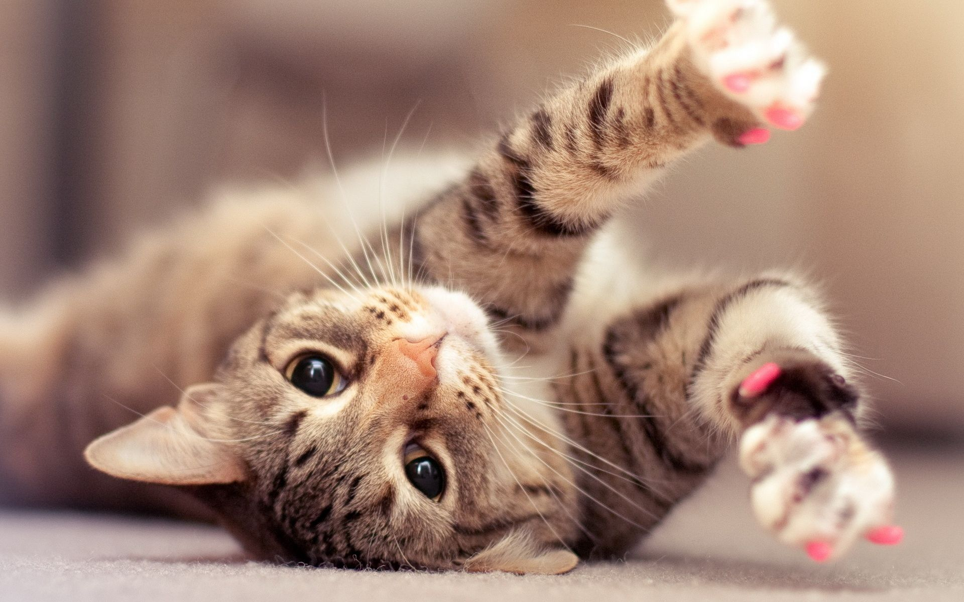 Full Hd Cute Cat Wallpaper Wallpapers Pinterest Gatos
