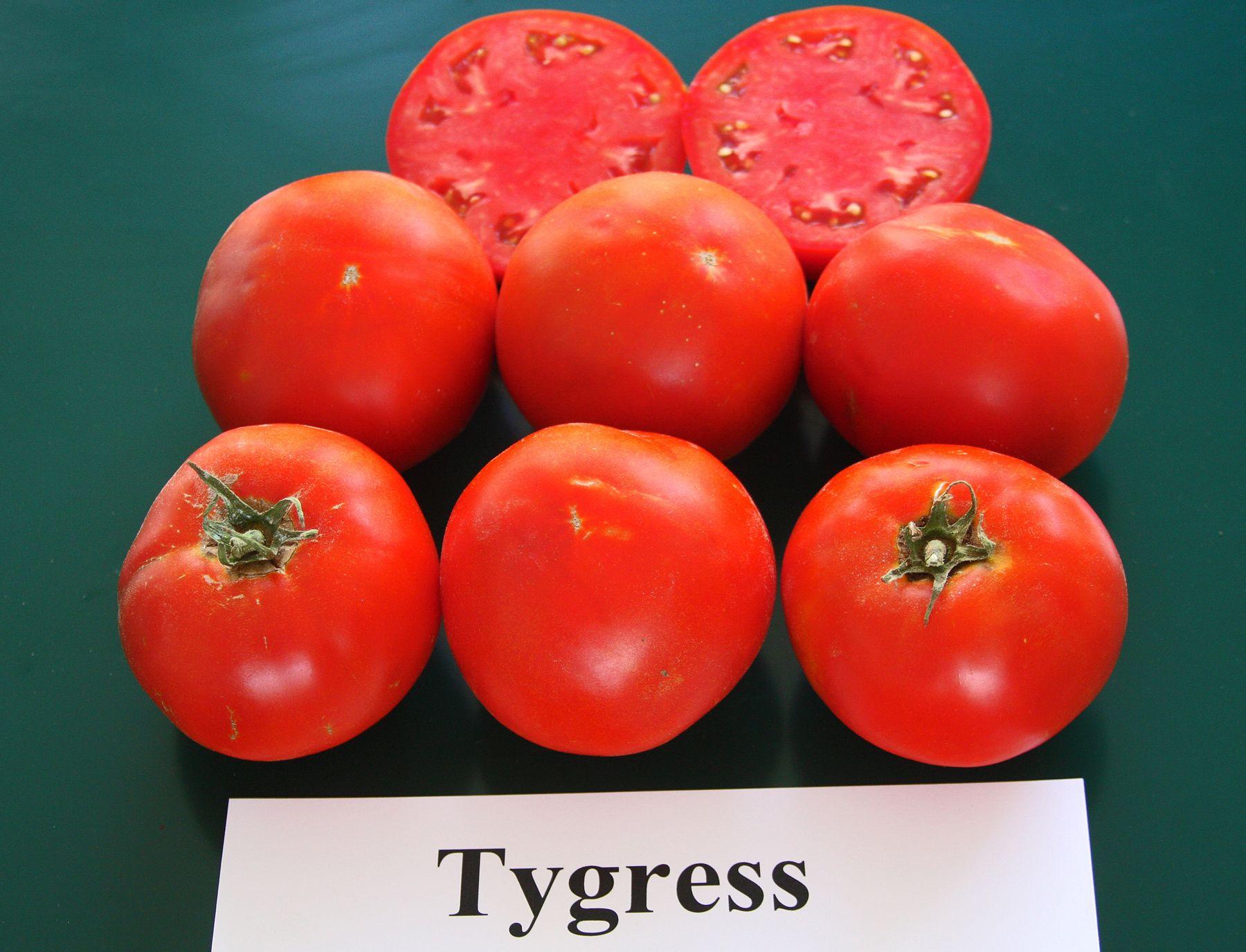 PLANTanswers Plant Answers Tomato, Plants, Vegetables