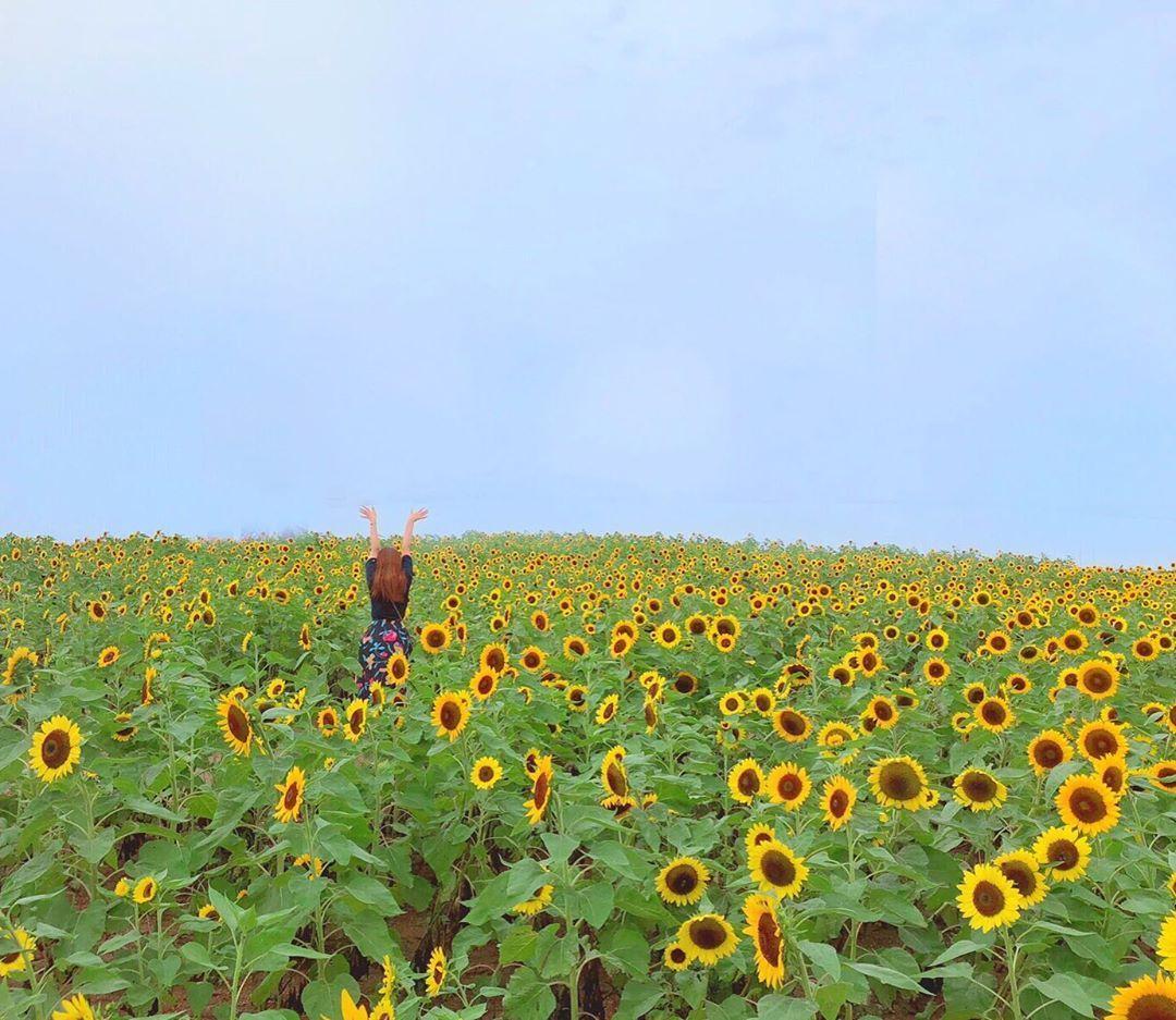 さじき あわじ 花