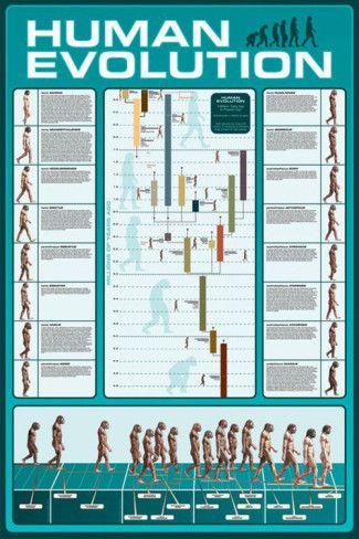 Human evolution pinterest human evolution evolution and human evolution poster publicscrutiny Gallery