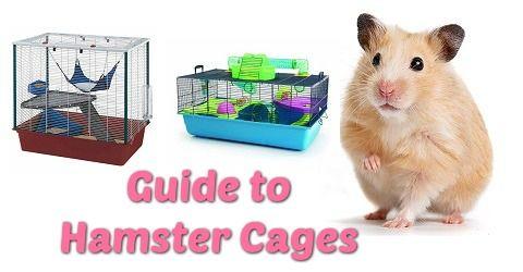 Hamster Cages Hamster Cage Hamster Habitat Syrian Hamster Dwarf Hamster Hamster Hamster Cages Winter White Hamster