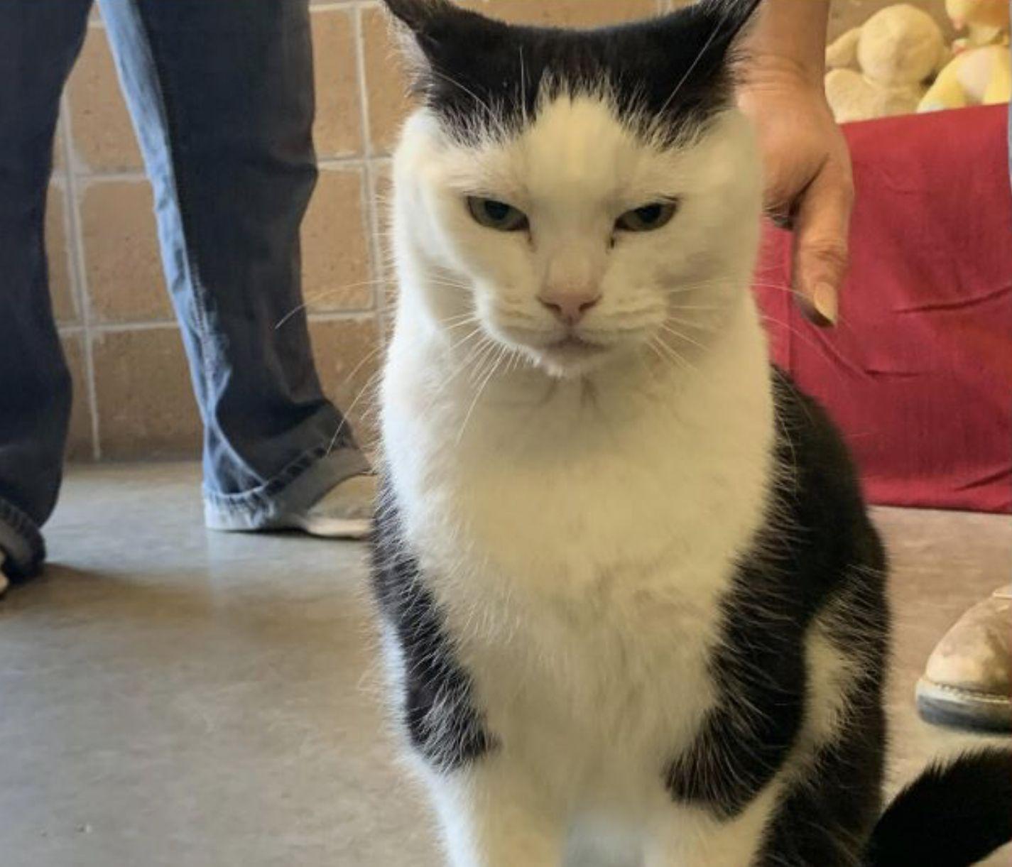 Australia Creates World S Largest Cat Proof Fence In 2020 Animal Shelter Adoption Sassy Cat Animal Shelter