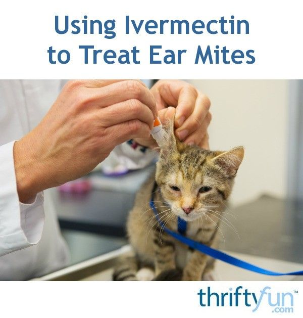 Using Ivermectin To Treat Ear Mites Dog Ear Mites Cat Ear Mites Mites