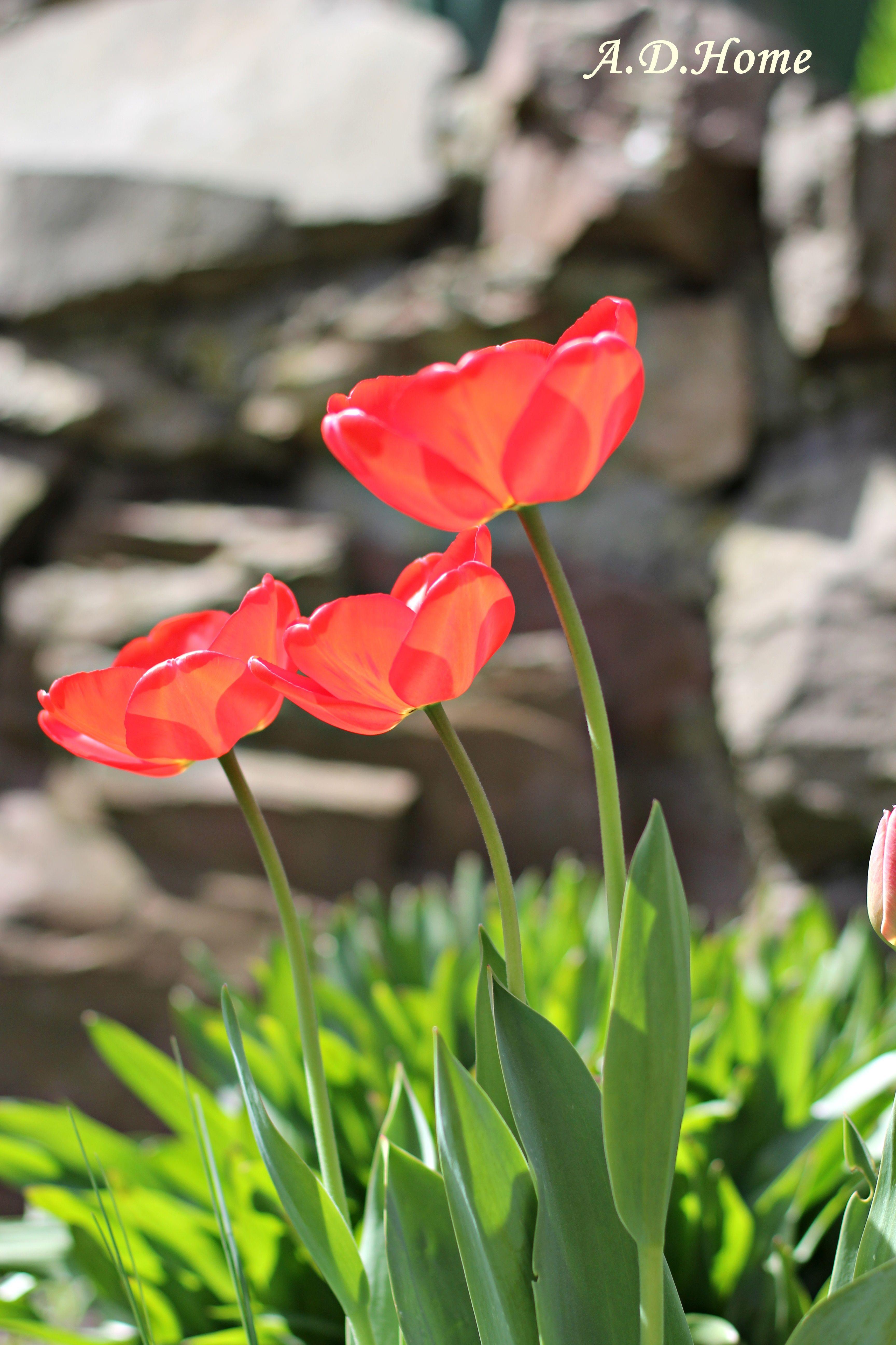 A D Home To Co Rece Stworza Kwiaty Ogrod