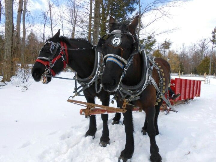 Horses & sledge....