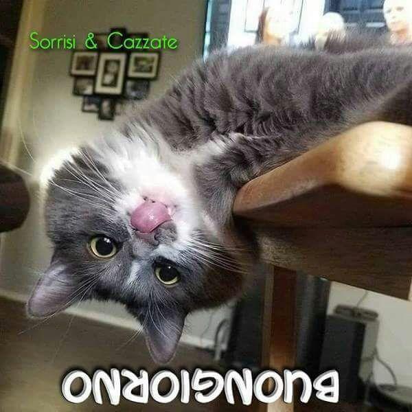 Buongiorno gattini pinterest cats funny cats and for Buongiorno con gattini