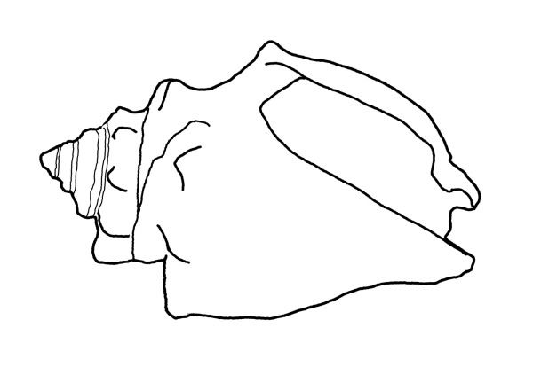 coloring pages shells and sand