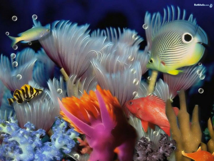 Beauty Inside Water Colorful Fish Photography Colorful Fish Beautiful Fish Water Animals
