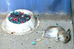 fb5c2bd18db7ebcfa74595237c2f8323 - How To Get Rid Of Mice In Compost Bin