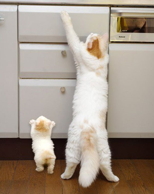 Kitty see, kitty do