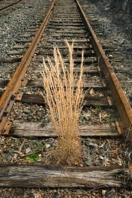 Railroad Ties Work Well For Retaining Walls And Edging But Creosote A Black Tar Like Wood Preser Railroad Ties Above Ground Garden Railroad Ties Landscaping