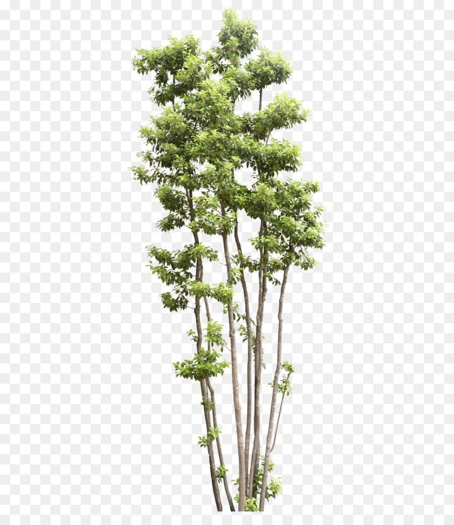 Tree Shrub Transparency And Translucency Trees Png Is About Is About Evergreen Plant Shrub Houseplant Flowerpot Tree S Birch Tree Art Shrubs Trendy Tree