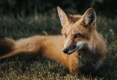 Photo of Tier Tapeten für iPhone niedlichen Tier Tapeten kostenlos Tier Tapeten für i …