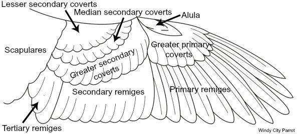 Anatomy of a wing