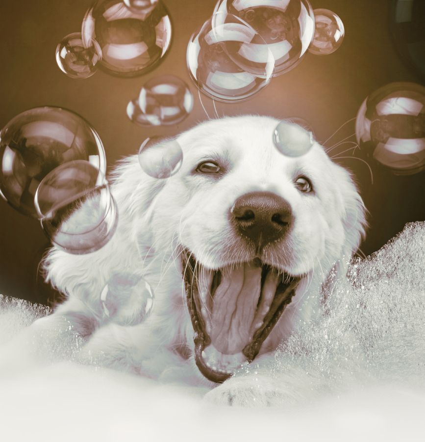 Pup Bubble Bath Puppy Dogs Multicityworldtravel Com We Cover The