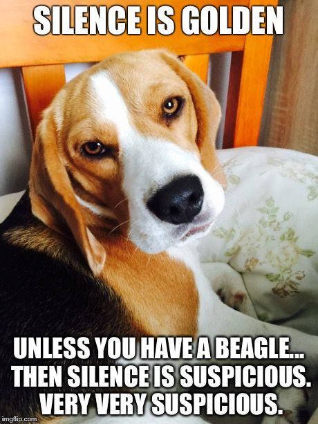 Pin By Cody Hickman On Jokes Dog Quotes Funny Funny Dog Memes