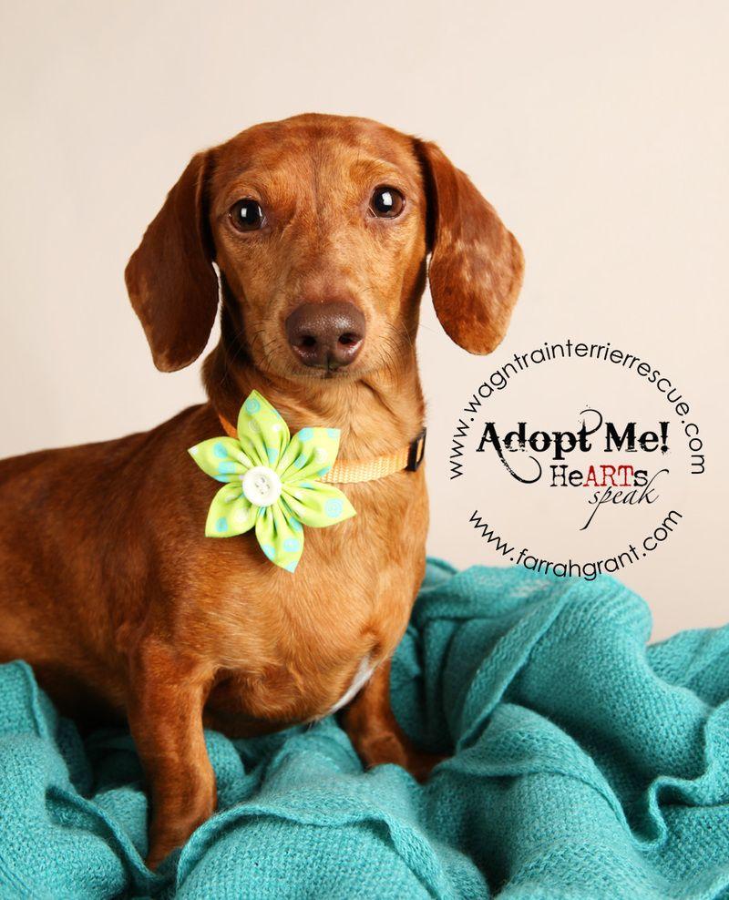 Adopt Daisy On