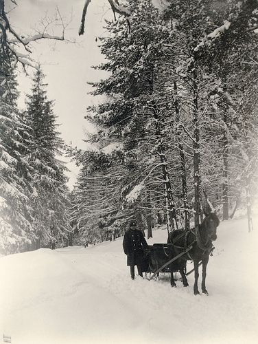 Robert Frost Stopping By Woods On A Snowy Evening Snow Forest Sweden Out Of The Dark