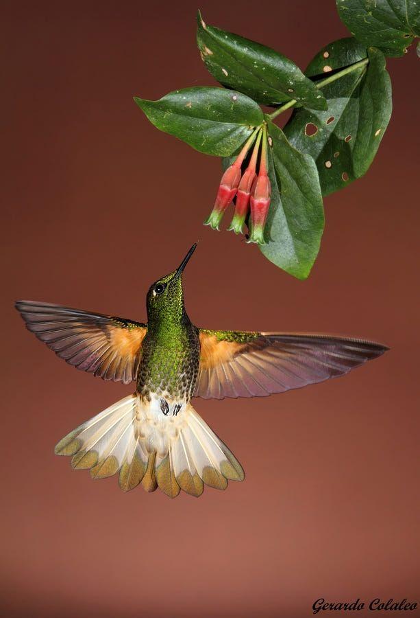 Animals photo by Gerardo Colaleo