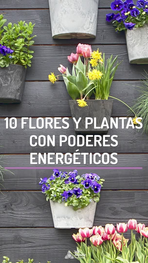 10 flores y plantas con poderes energéticos