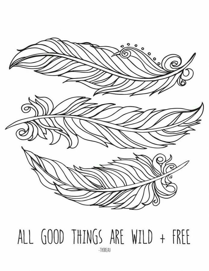 Feathers Free Printable Coloring Pages Coloring Pages Free