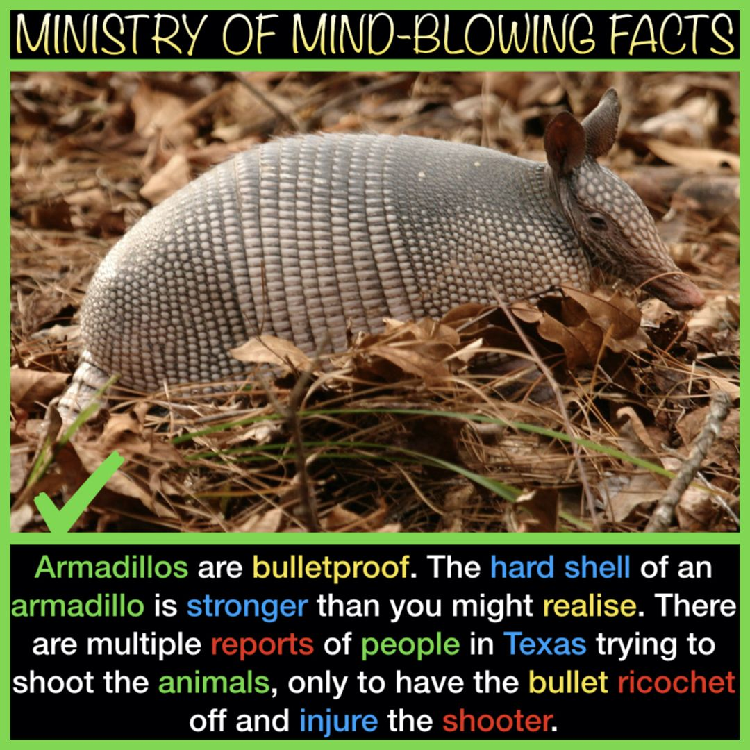 Armadillos are bulletproof.               #science #nature #people #animals #Facts #FactsMatter #FactsNotFear #factsfriday #FACT #FactCheck #World #Earth #interesting #armadillo #mammals #interestingfacts #Europe #UK #USA #Canada