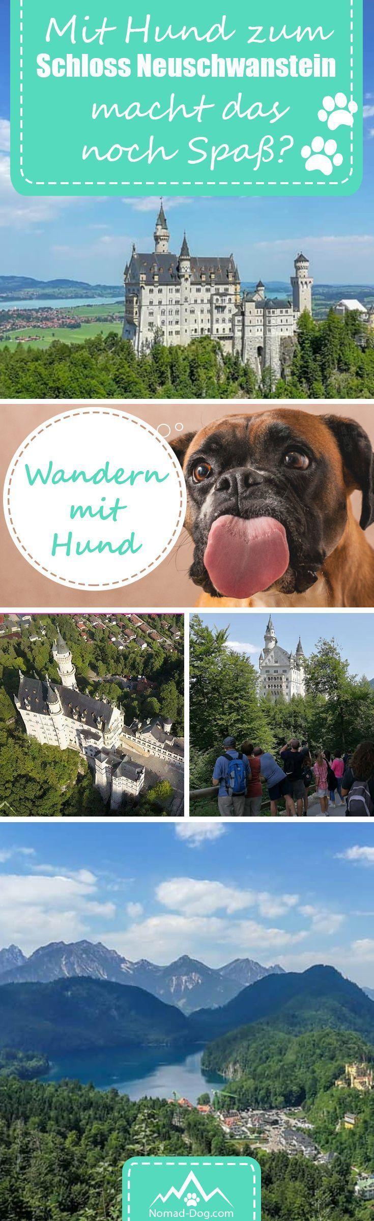 Neuschwanstein Mit Hund Macht Das Noch Spass Abenteuerurlaub Hunde Ausflug