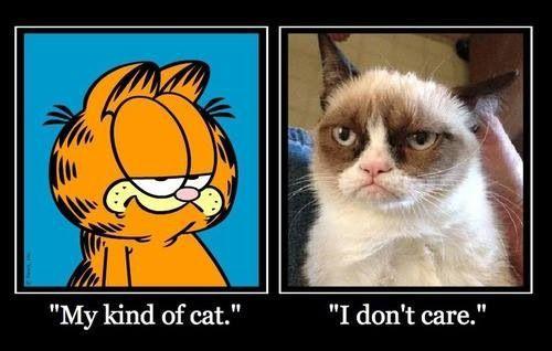 My Kind Of Cat I Don T Care Grumpycat Meme Grumpy Cat Garfield Cat Cat Love
