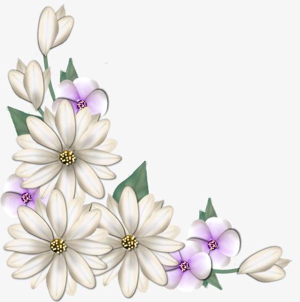 ورود بيضاء البتلة نبات ورود بيضاء Flower Art Flower Painting Flower Cards