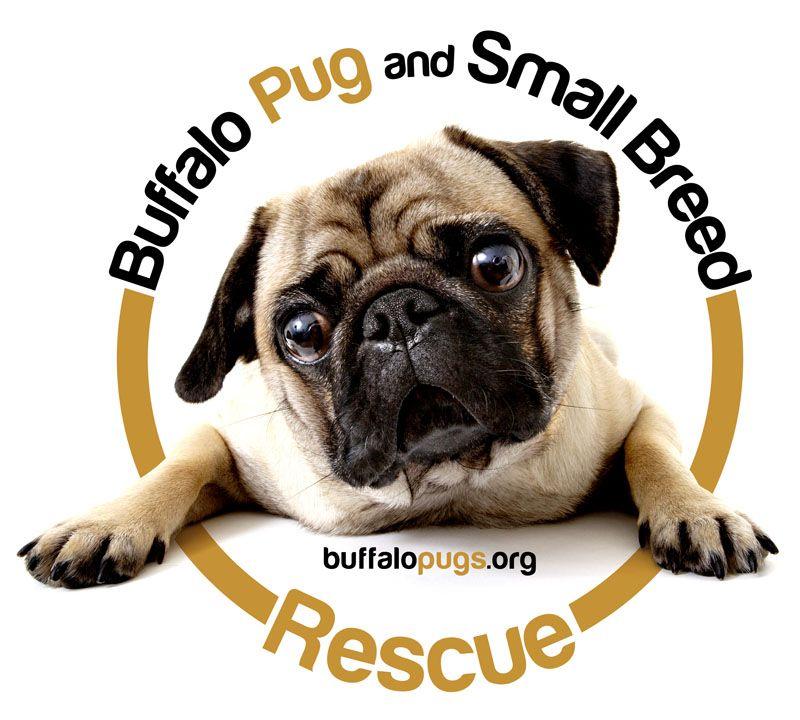Buffalo pug small breed rescue inc is a 501c3