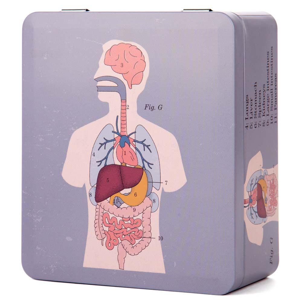 Life Of Jay Anatomical Organs Tea Caddy Peters Of Kensington