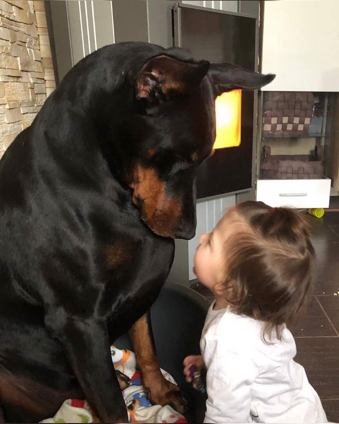 How To Do Alpha Exercises With A Dominant Dog In 2020 Doberman