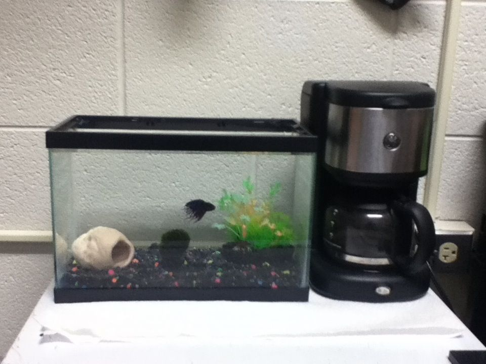 2 5 gallon betta fish tank dorm room set up in the tank is a live