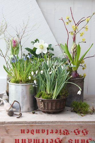 Wildes Frühlingsgefühl