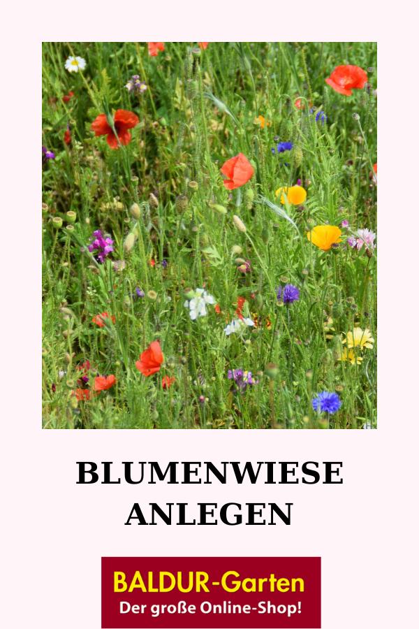 Blumenwiese Anlegen Blumen Wiese Blumenwiese Anlegen Blumenwiese