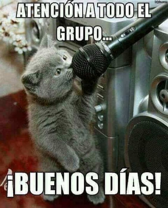 Imagenes De Buenos Dias Grupo De Whatsapp Graciosas Buenos Dias Divertido Imagenes Chistosas Para Grupos Buenos Dias Con Gatos