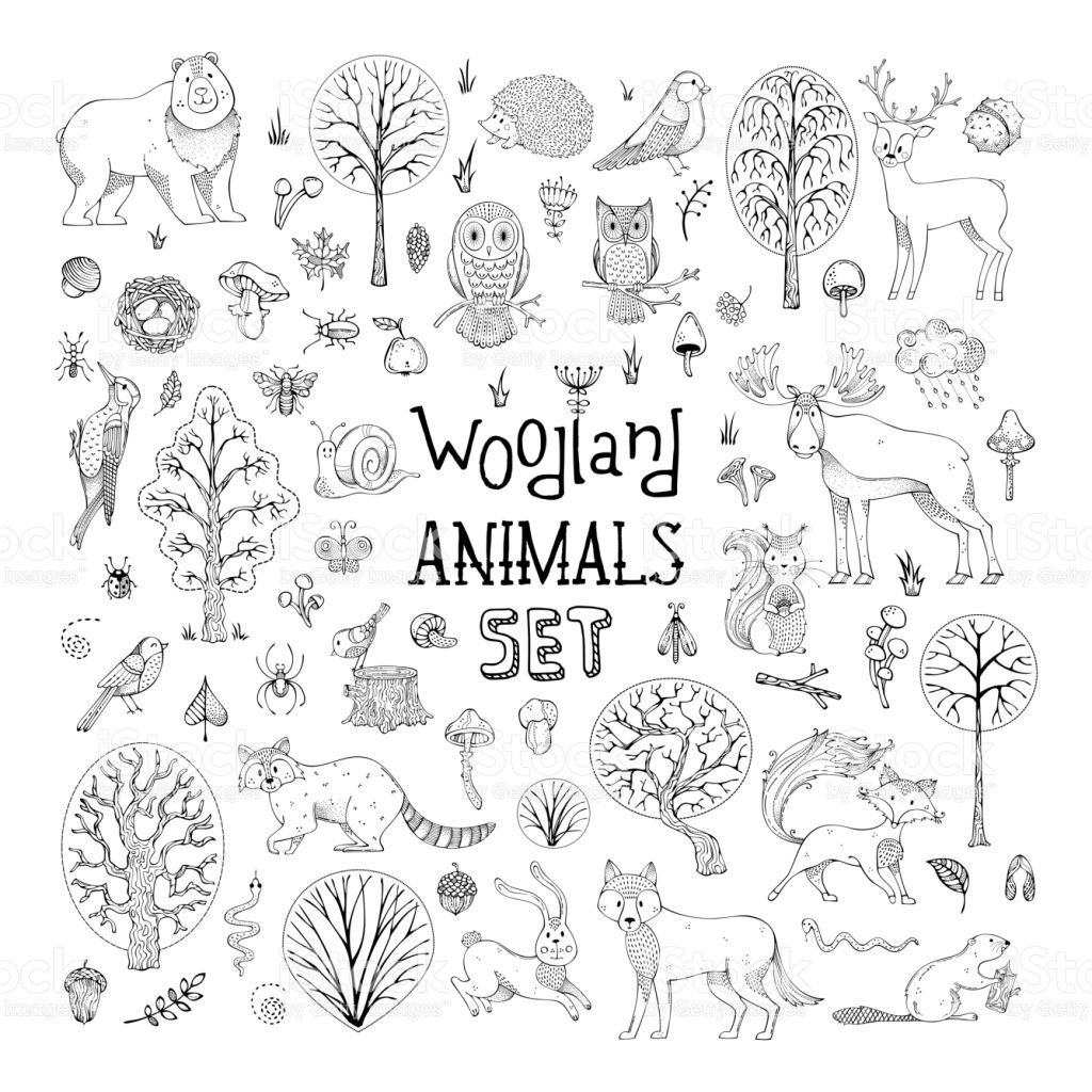 Hand Drawn Collection For Children Colouring Books Invitations Woodland Animals How To Draw Hands Animal Doodles