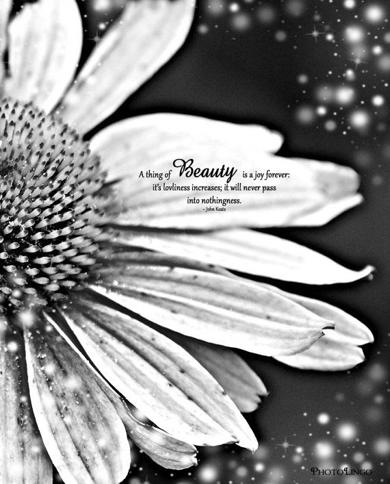 Gorgeous 8x10 black and white nature photo print dreamlike daisy with famous quote by