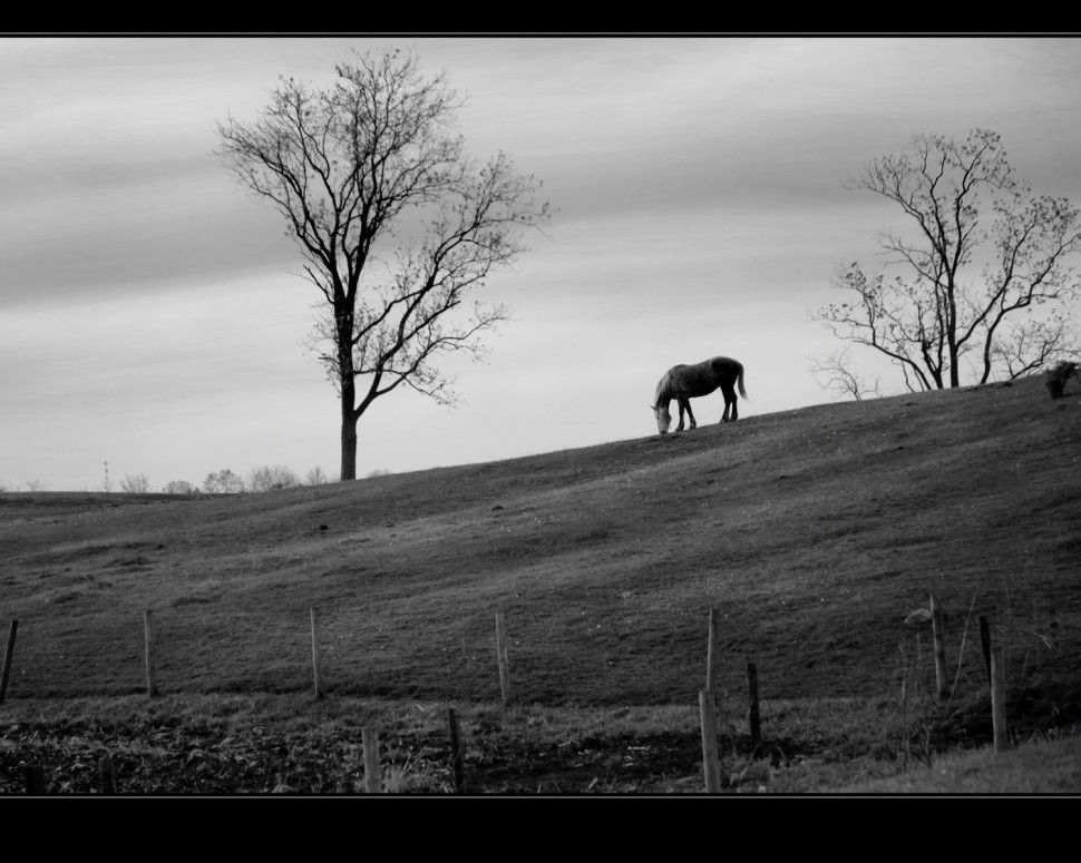 """""""A Gray Day for a Snack"""", indiana equine photographer, Kristi Swift"""