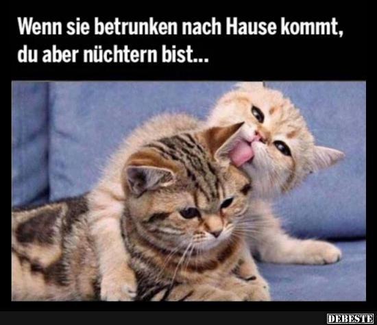 Debeste De Lustige Tiermemes Lustige Tiere Katzen Witze