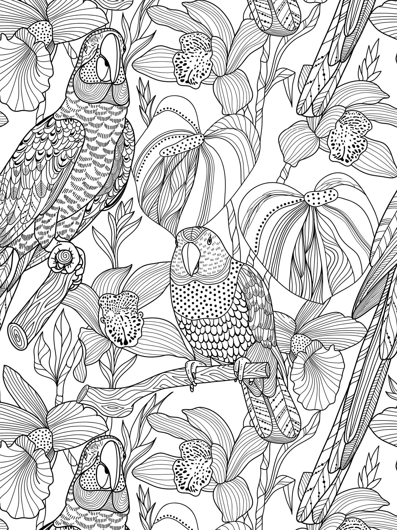 Schmetterling im Muschelwald: Amazon.de: Bücher | Malvorlagen Vögel ...