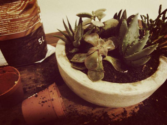Betonschale Diy diy der woche mini sukkulentengarten in beton schale gardens