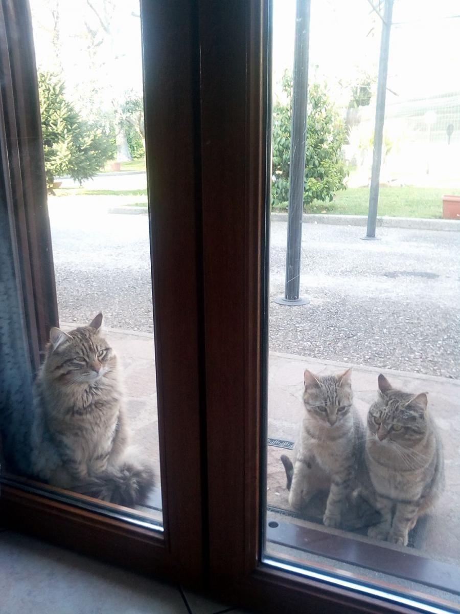 Pin von Maria João auf Cats in Windows   Katzen