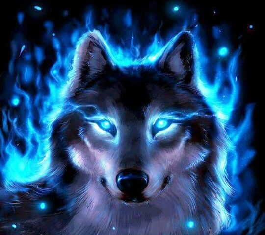 Really Cool Pictures Of Wolves