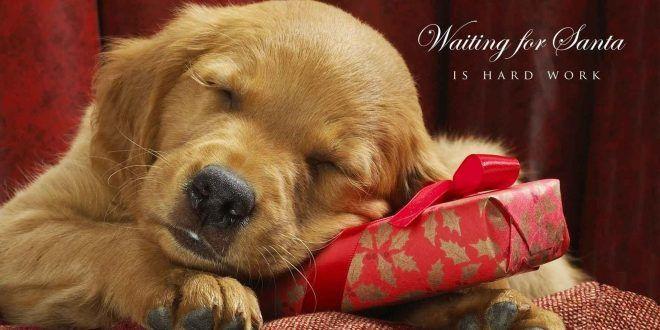 Hd Christmas Wallpapers 1080p Wallpaper Clips Christmas Dog