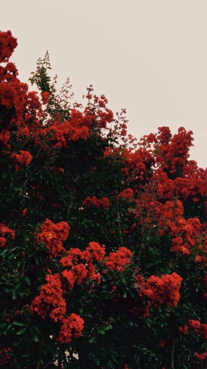 Follow my Pinterest! → cherryhaired
